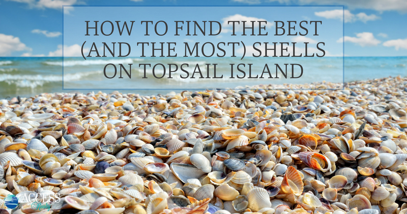 How to find the best and the most shells on topsail island www