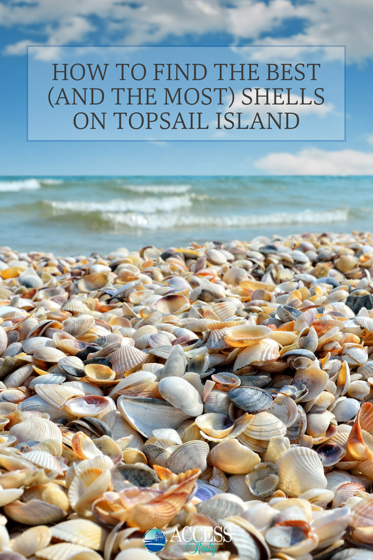 When Is Your Next Topsail Shelling Adventure We D Love To See Best Island Seashell Finds Drop Us A Picture In Our Comment Section